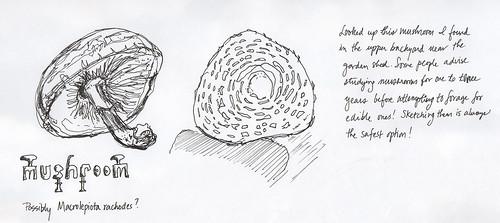 Mushroom backyard