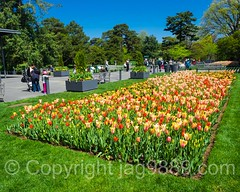 New York Botanical Garden, Bronx, New York City