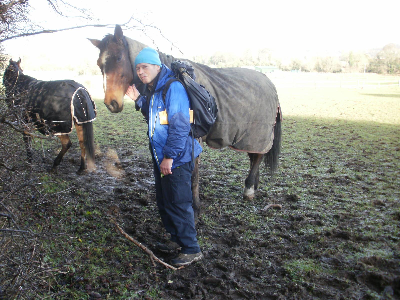 Tattenham Corner horses OLYMPUS DIGITAL CAMERA