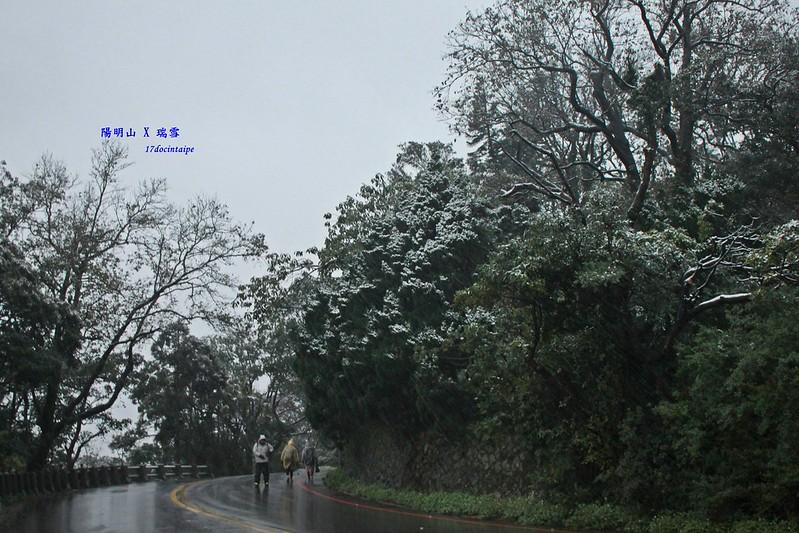 2016-台北陽明山-瑞雪-難得一見的雪白山景-17度C隨拍 (22)