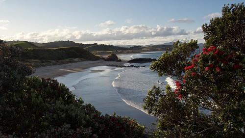 ocean sea newzealand seascape beach rock swimming swim landscape eveningsun wave bluesky pacificocean coastline rodney pohutukawa newzealandnorthisland haurakigulf tawharanui aucklandarea tawharanuiregionalpark omahabay