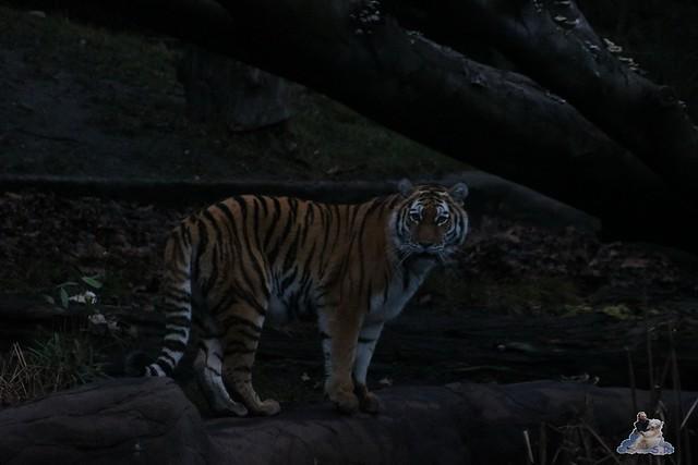 Tierpark Hagenbeck 02.01.2015   130