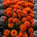 Orange Flowers 6