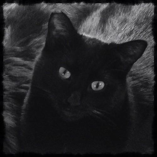 February 13 - A Pet