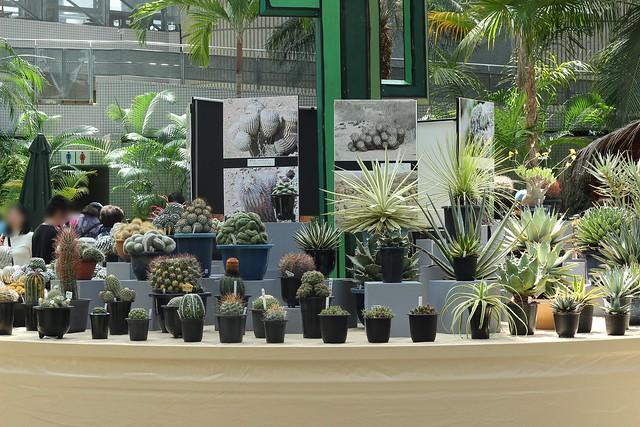 cacti&succulent