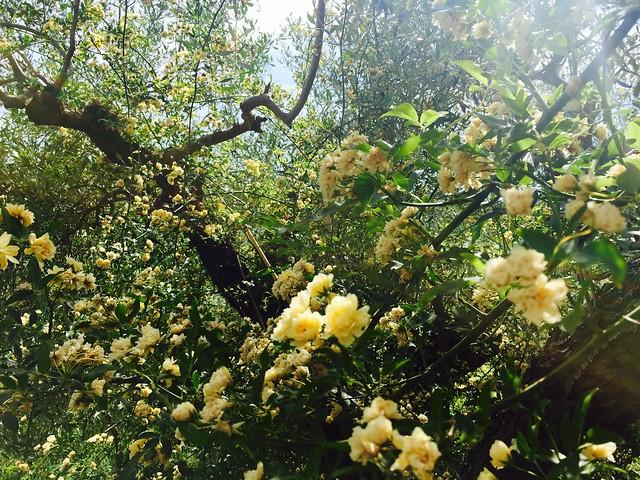 primavera-cr-brian-dore