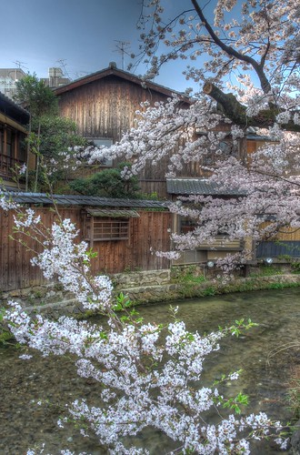 Gion-Shirakawa, Kyoto on APR 06, 2016 (25)