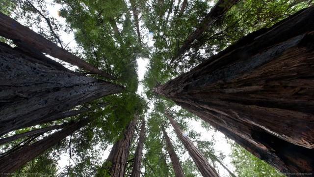 0001big-trees