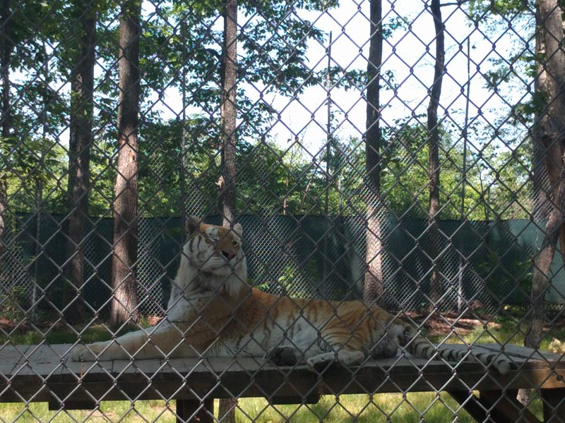 Tiger World 2016