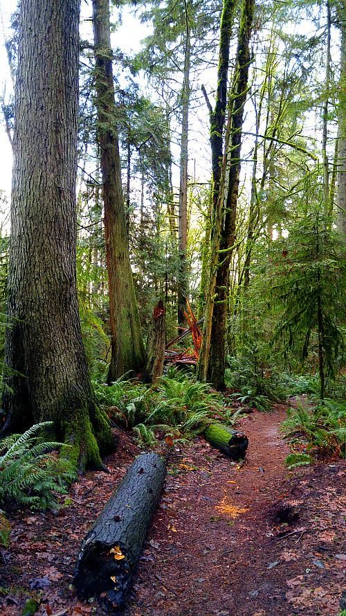 ForestPark6