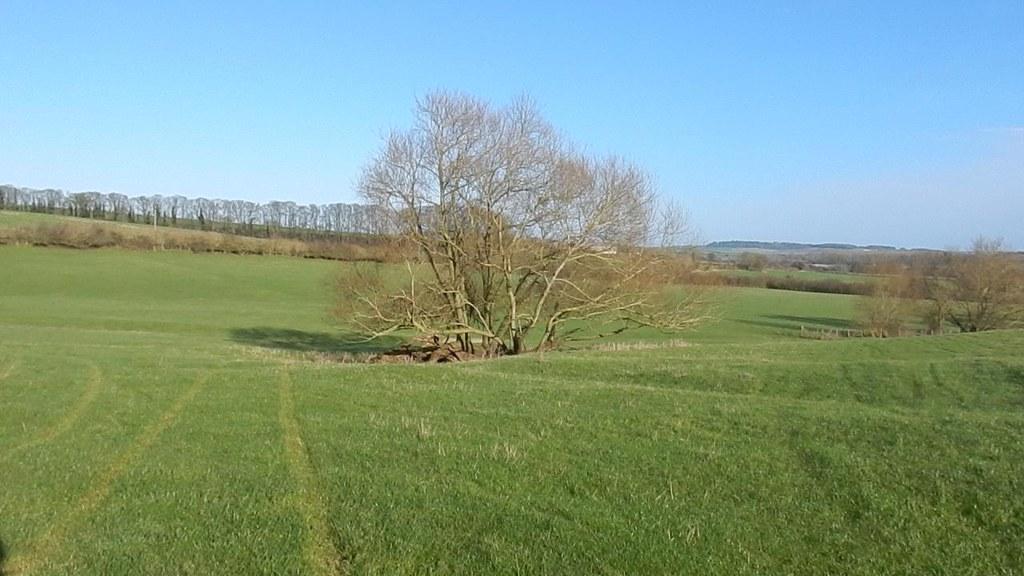 Prominent tree Hiding stile. Haddenham Circular (short)