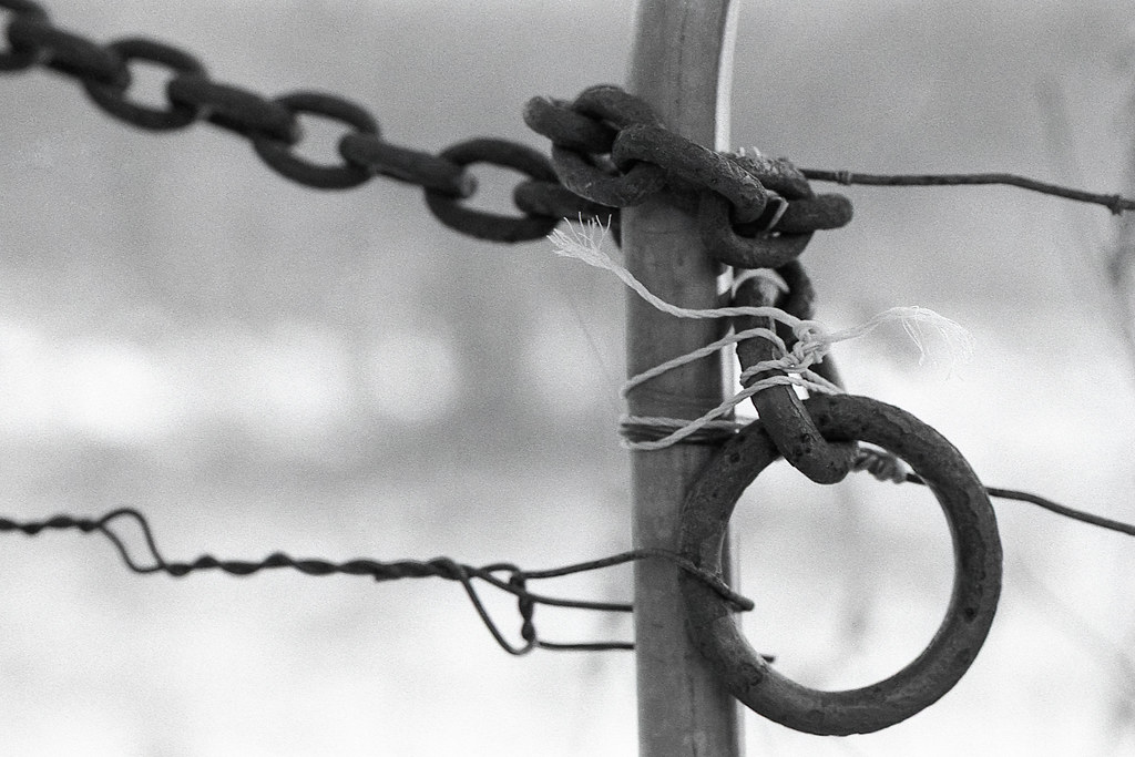 Chain on Fence