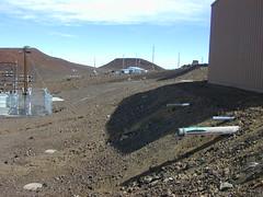 starr-021114-0112-Taraxacum_officinale-habitat-Science_City-Maui