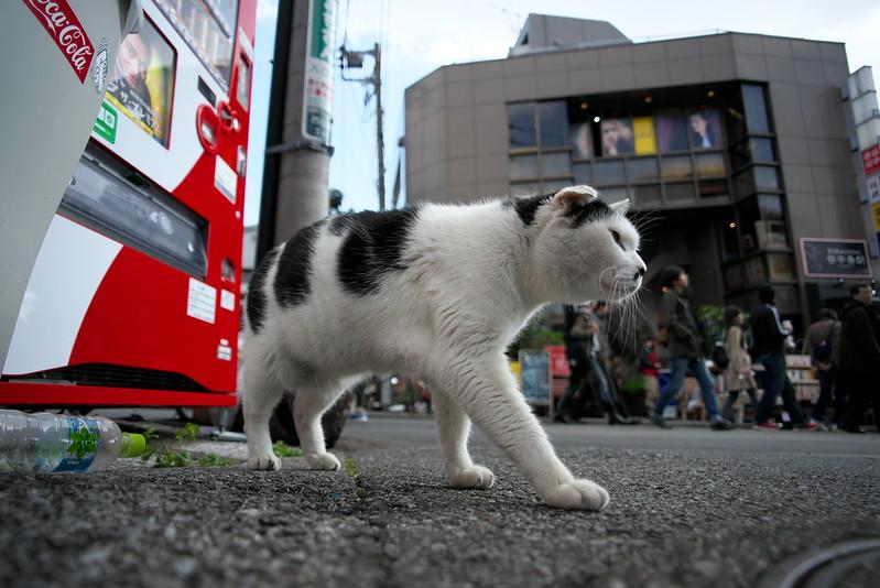 東京路地裏散歩 2016年3月21日