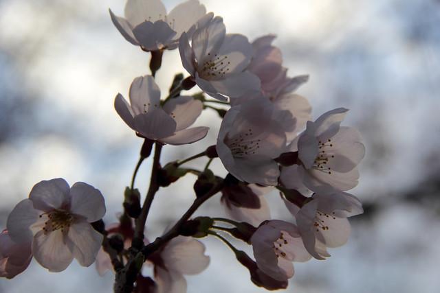 20160324_Flowers_011
