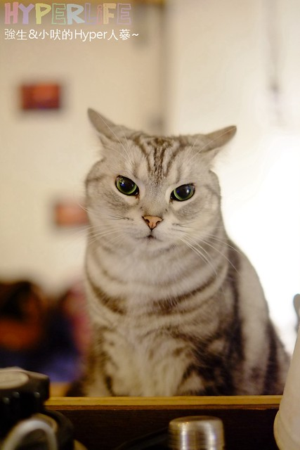 25501810744 d7dc95a110 z - 超可愛貓咪寵物餐廳【巷子有貓】,逢甲巷弄無菜單美食~一定要預約才吃的到的日式家常菜!(已歇業)