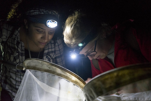 NRCA students survey insect biodiversity in the UConn Forest during a night field activity.