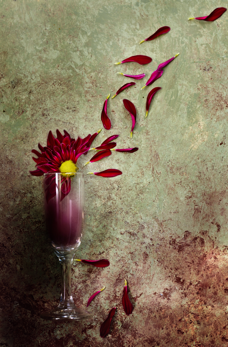 FlowerStillDramaticFinal-800PX-SimiJois