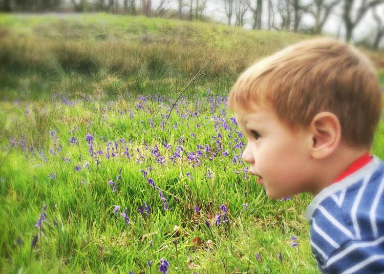 geocaching bluebell field