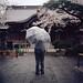 Rain Cherry by shuji+