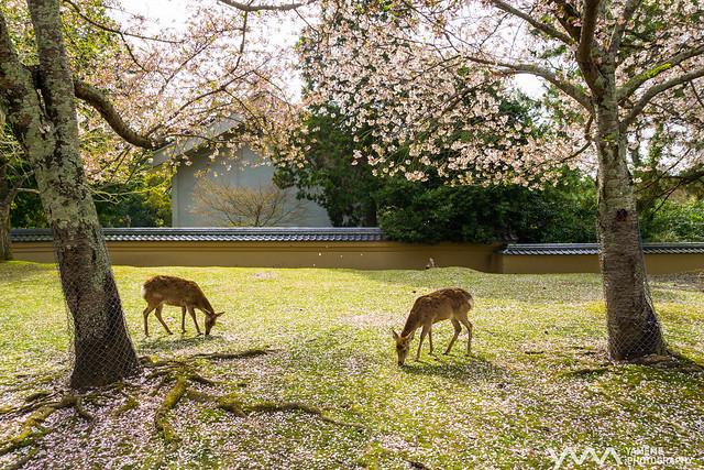 飽餐一頓 Full / Nara, Japan
