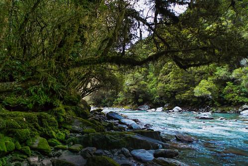 newzealand water bush rainforest nz southisland haastriver neargatesofhaast atthundercreekfalls