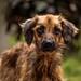 Doggy by jbanistaok50