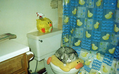 muffins loves the ducky bathroom