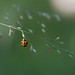 Coccinelle by Thierry Baboulenne