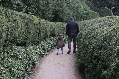 Powis Castle hedges 3