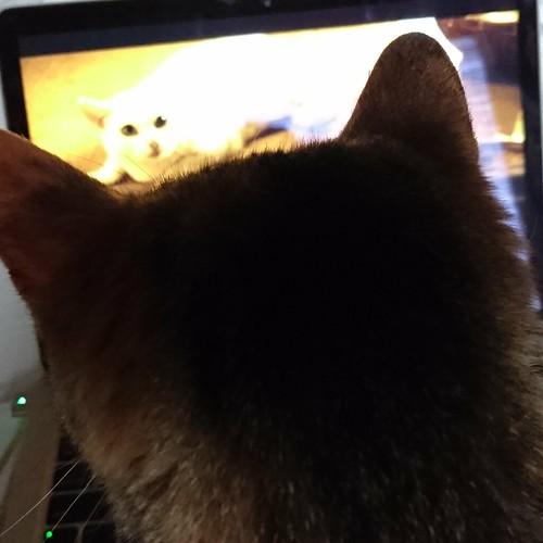 あーちゃんと一緒にHuluで『猫侍』を見るよ by Chinobu