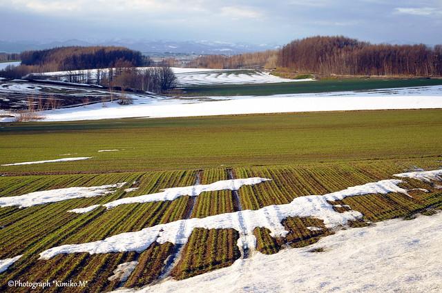秋まき小麦の丘