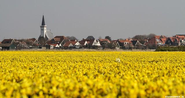 Field daffodils at Texel. #Texel #texels #narcis #field #church #wadden #waddeneiland #nature #natuur #justin #sinner #pictures #kerk #landschap #flower #bloem #dorp #village #land #natuurbeeld #canon #color #amazing #texelpics #tower #city #view #zee