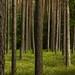 Czarnia - rezerwat (1) by jacekbia