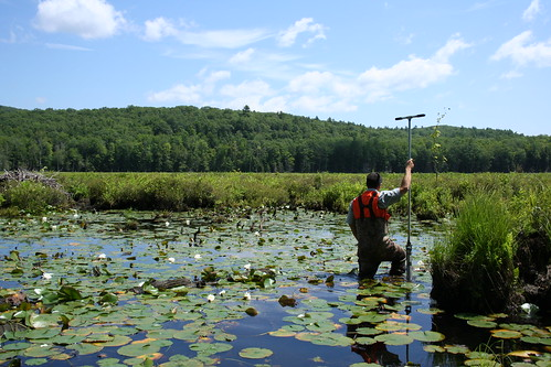 NYC Watershed Wetlands