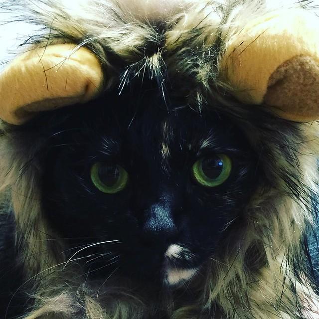 #cat #猫 #ねこ 🐯🐯🐯
