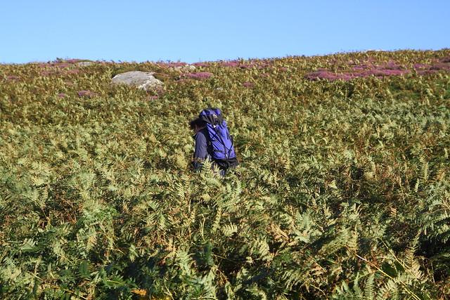 Climbing through the bracken