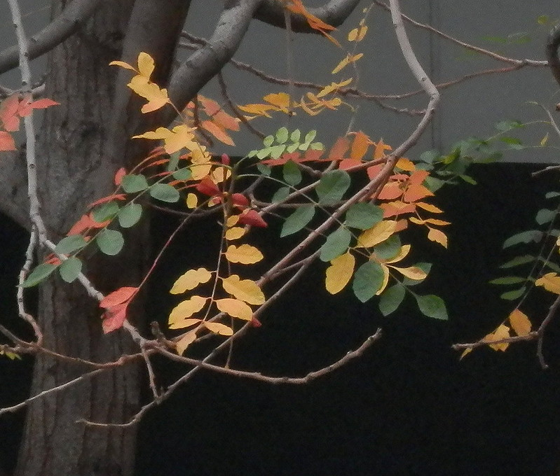 Musical leaves