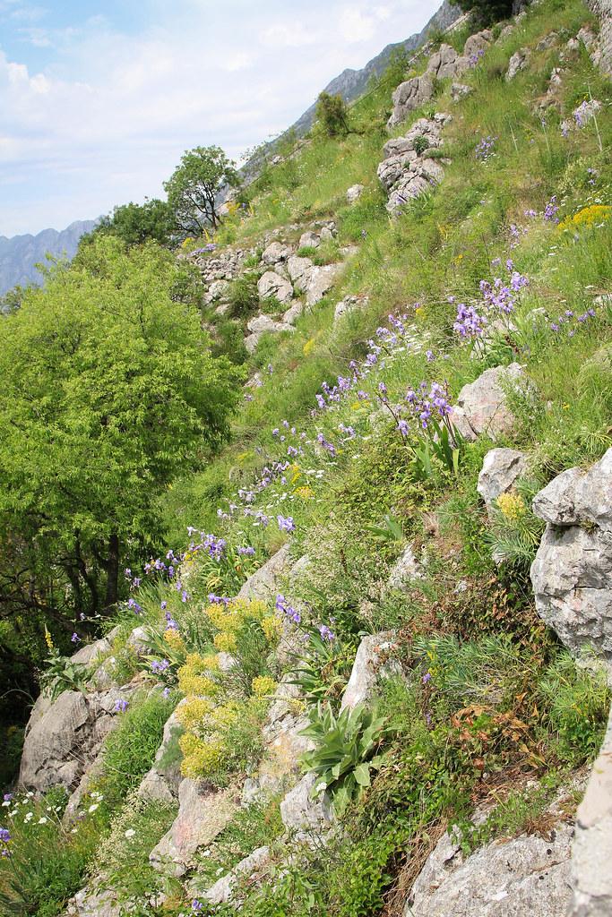 1505_montenegro_1380.jpg