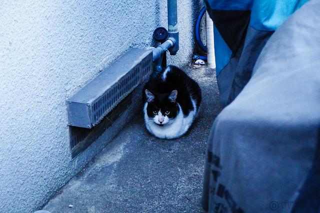 Today's Cat@2016-02-18