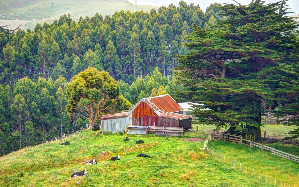 Dunedin, New Zealand