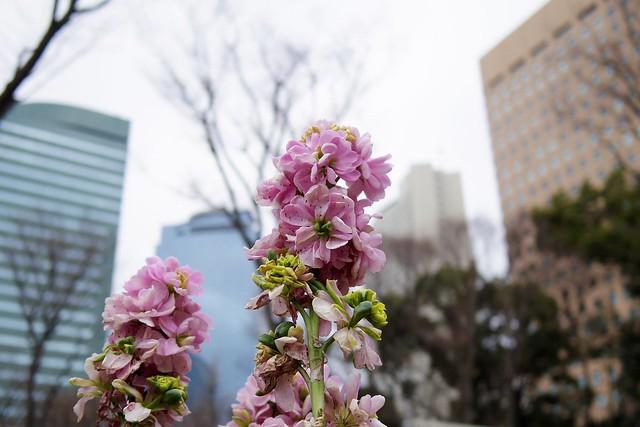 2016年3月13日新宿中央公園-27