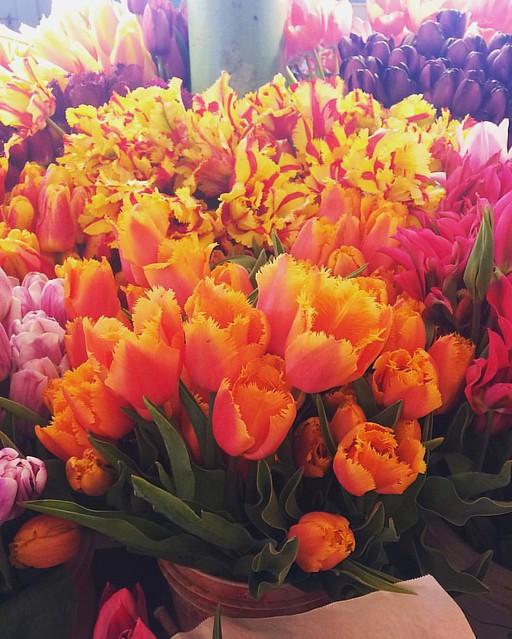 Tulip Heaven. 💐🌷