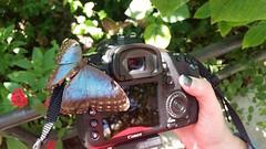 Butterfly on camera