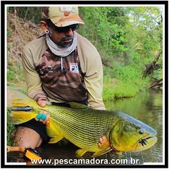 Na pegada do fly. O grande Kid Ocelos com um douradão fisgado para a nova temporada na FishTv.  #pescaamadora #pesqueesolte #baitcast #pescaesportiva #sportfishing #fishing #angler #monsterfish #bigfish #bassmaniacs #catchandrelease #peacock #peacockbass