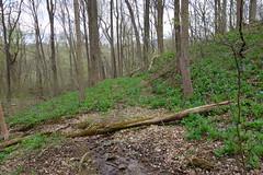 DSC02104 004 Spring Drainage