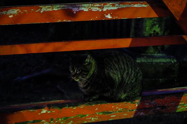 Today's Cat@2016-01-29