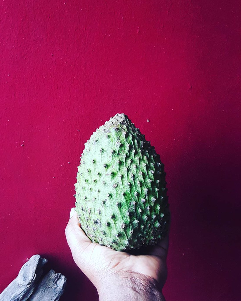 Soursop #creating #crafting #soursop #kitchenbutterfly #tropicalfruits #inseason #fruitsinseason #tropicalfruits #tropicalflavours