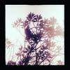 Tui in a tree #snapseed #tui #themount
