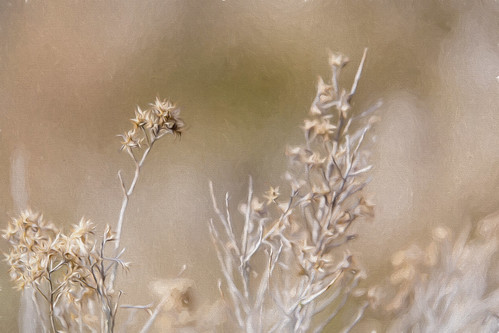 winter desert sagebrush desertflora canon6d tamron70200f28 topazimpression